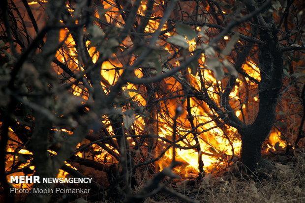 جنگل های الوار گرمسیری طعمه حریق شدند