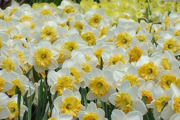 صنایع مرتبط با گل و گیاه در جویبار فراهم گردد